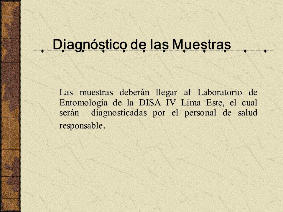 Diagnóstico de las Muestras Las muestras deberán llegar al Laboratorio de Entomología de la DISA IV Lima Este, el cual serán diagnosticadas por el per