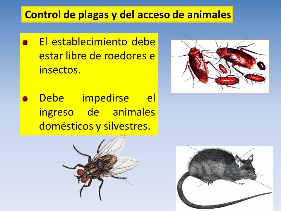 El establecimiento debe estar libre de roedores e insectos. Debe impedirse el ingreso de animales domésticos y silvestres. Control de plagas y del acc