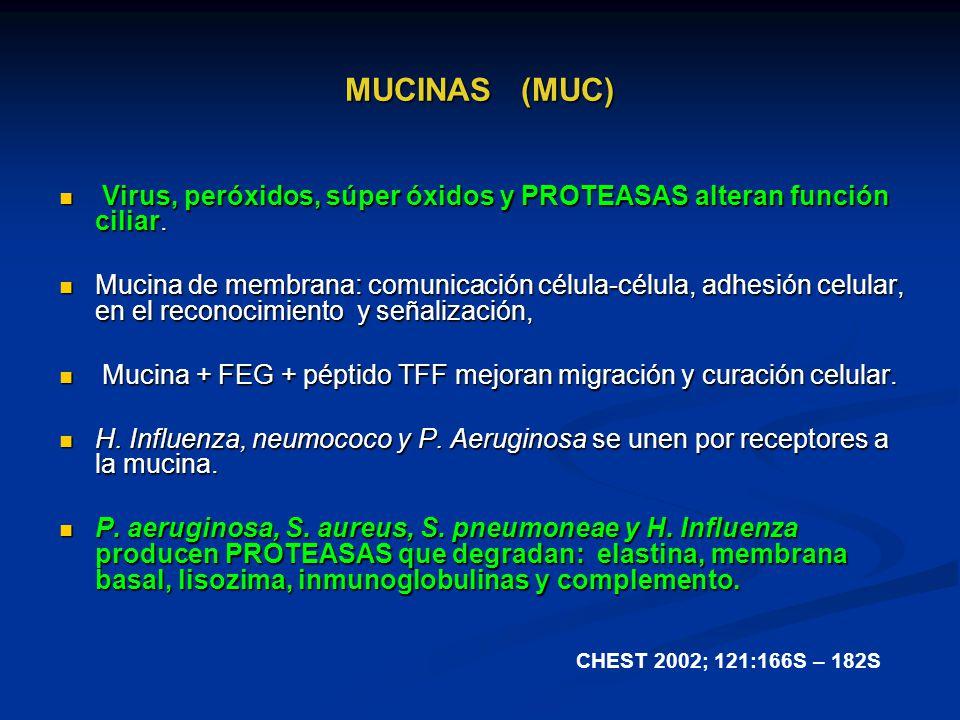 MUCINAS (MUC) Virus, peróxidos, súper óxidos y PROTEASAS alteran función ciliar. Virus, peróxidos, súper óxidos y PROTEASAS alteran función ciliar. Mu