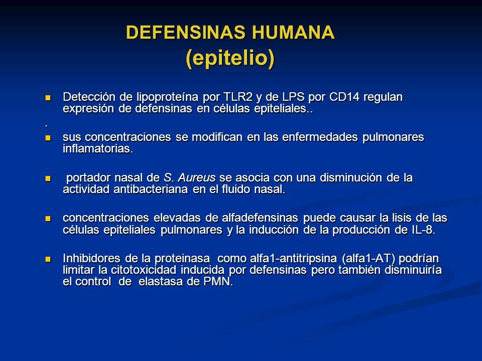DEFENSINAS HUMANA (epitelio) Detección de lipoproteína por TLR2 y de LPS por CD14 regulan expresión de defensinas en células epiteliales.. Detección d