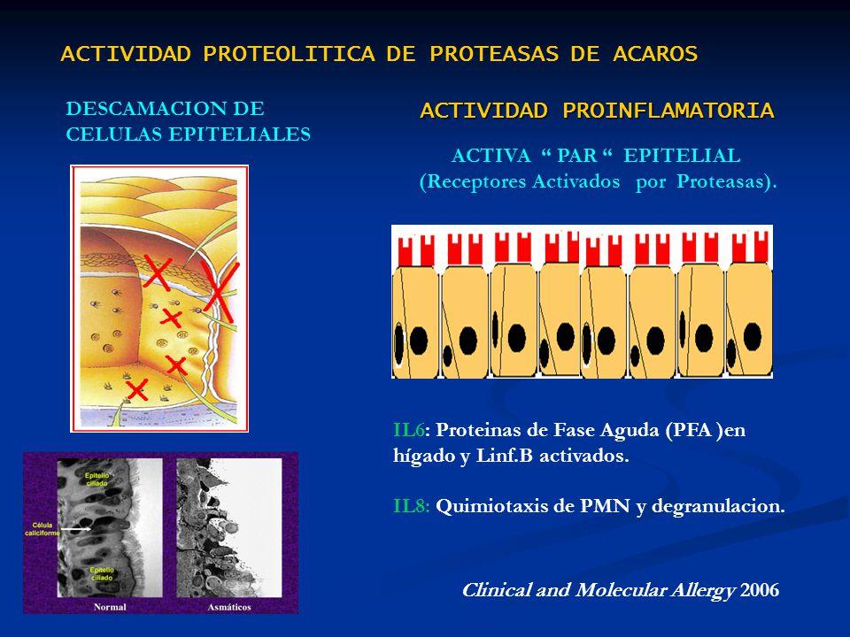 DESCAMACION DE CELULAS EPITELIALES Clinical and Molecular Allergy 2006 ACTIVA PAR EPITELIAL (Receptores Activados por Proteasas). ACTIVIDAD PROTEOLITI