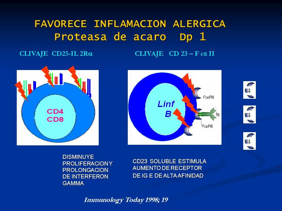 FAVORECE INFLAMACION ALERGICA Proteasa de acaro Dp 1 CLIVAJE CD 23 – F c IICLIVAJE CD25-IL 2R CD23 SOLUBLE ESTIMULA AUMENTO DE RECEPTOR DE IG E DE ALT