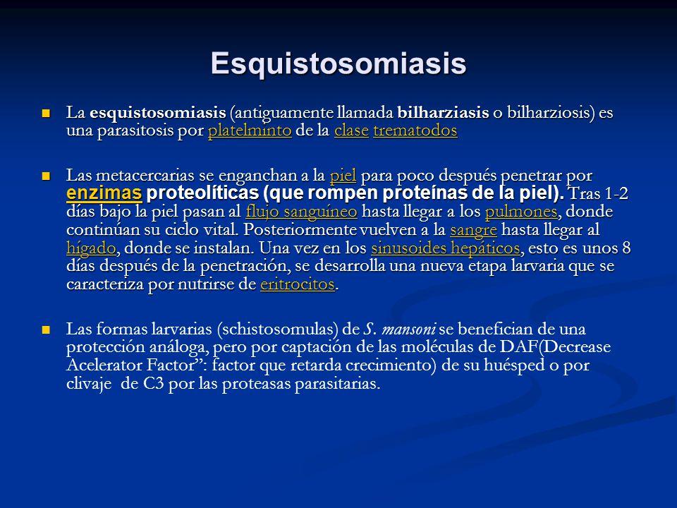 Esquistosomiasis La esquistosomiasis (antiguamente llamada bilharziasis o bilharziosis) es una parasitosis por platelminto de la clase trematodos La e