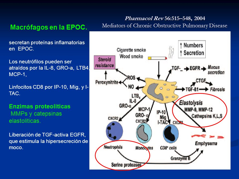 Pharmacol Rev 56:515–548, 2004 Mediators of Chronic Obstructive Pulmonary Disease Macrófagos en la EPOC. secretan proteínas inflamatorias en EPOC. Los