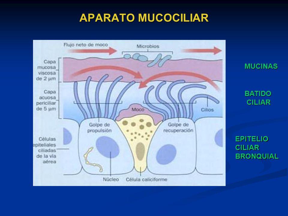 APARATO MUCOCILIAR MUCINAS BATIDO CILIAR CILIAR EPITELIOCILIARBRONQUIAL