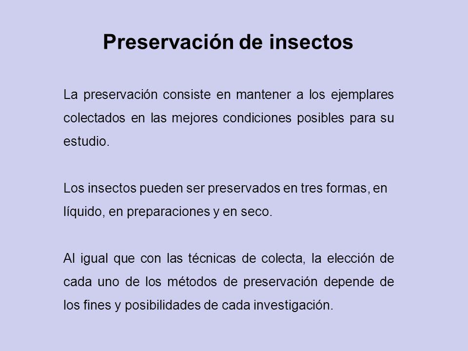 Preservación de insectos La preservación consiste en mantener a los ejemplares colectados en las mejores condiciones posibles para su estudio. Los ins