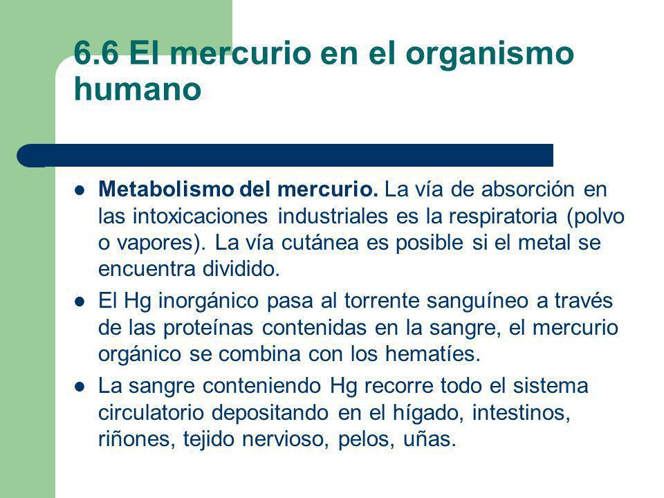 6.6 El mercurio en el organismo humano Metabolismo del mercurio. La vía de absorción en las intoxicaciones industriales es la respiratoria (polvo o va