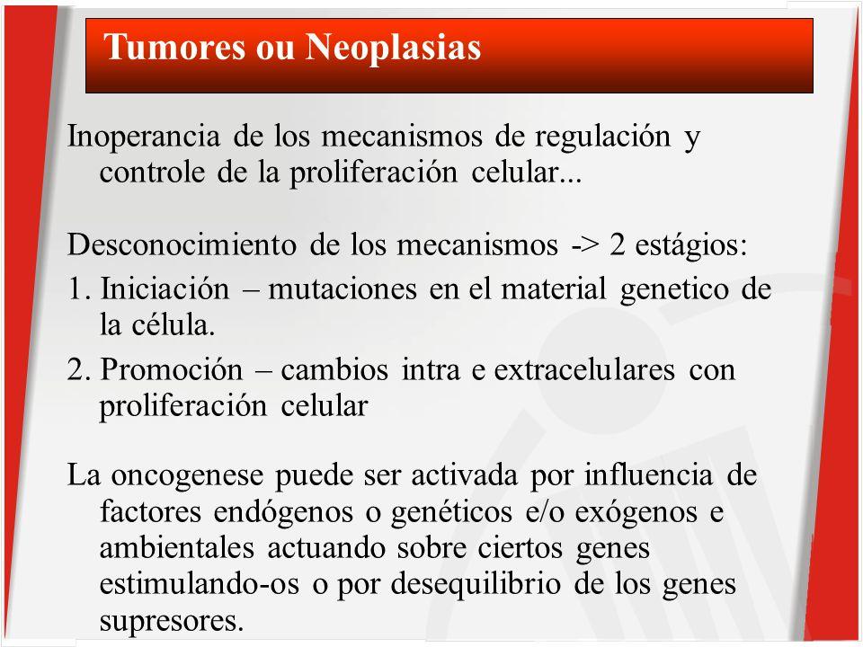 Inoperancia de los mecanismos de regulación y controle de la proliferación celular...