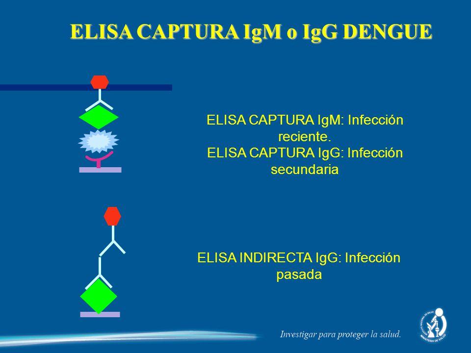 ELISA CAPTURA IgM o IgG DENGUE ELISA CAPTURA IgM: Infección reciente. ELISA CAPTURA IgG: Infección secundaria ELISA INDIRECTA IgG: Infección pasada