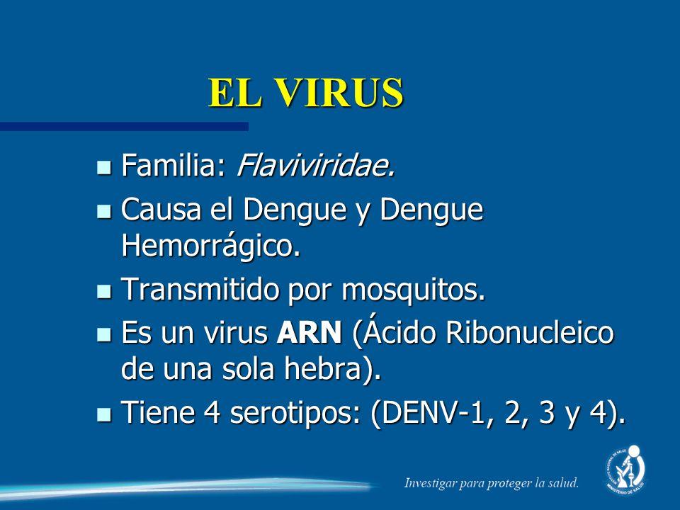 EL VIRUS n Familia: Flaviviridae. n Causa el Dengue y Dengue Hemorrágico. n Transmitido por mosquitos. n Es un virus ARN (Ácido Ribonucleico de una so