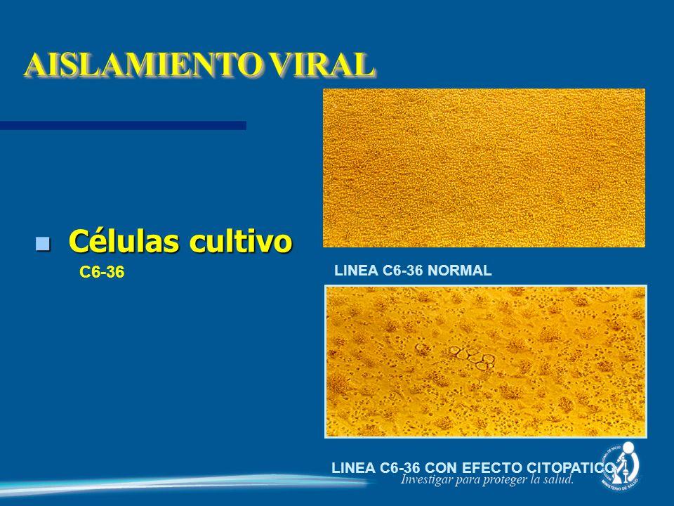n Células cultivo C6-36 LINEA C6-36 NORMAL LINEA C6-36 CON EFECTO CITOPATICO