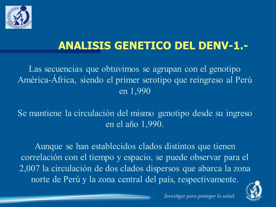 ANALISIS GENETICO DEL DENV-1.- Las secuencias que obtuvimos se agrupan con el genotipo América-África, siendo el primer serotipo que reingreso al Perú