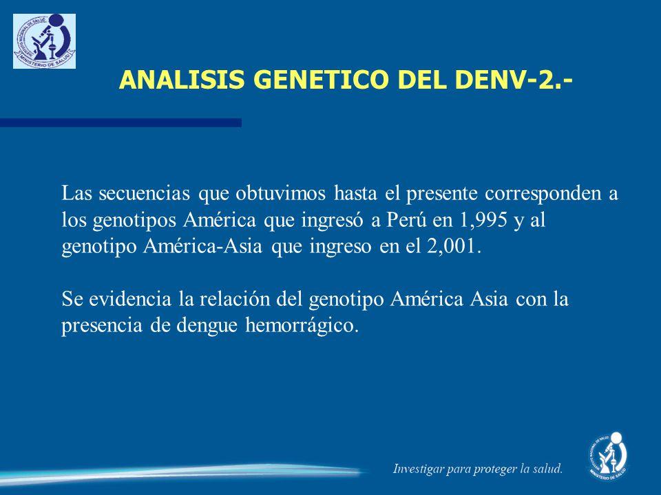 ANALISIS GENETICO DEL DENV-2.- Las secuencias que obtuvimos hasta el presente corresponden a los genotipos América que ingresó a Perú en 1,995 y al ge