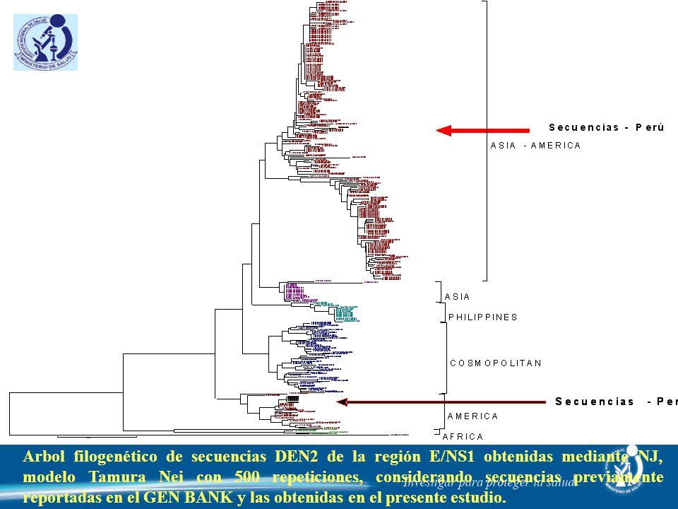Arbol filogenético de secuencias DEN2 de la región E/NS1 obtenidas mediante NJ, modelo Tamura Nei con 500 repeticiones, considerando secuencias previa