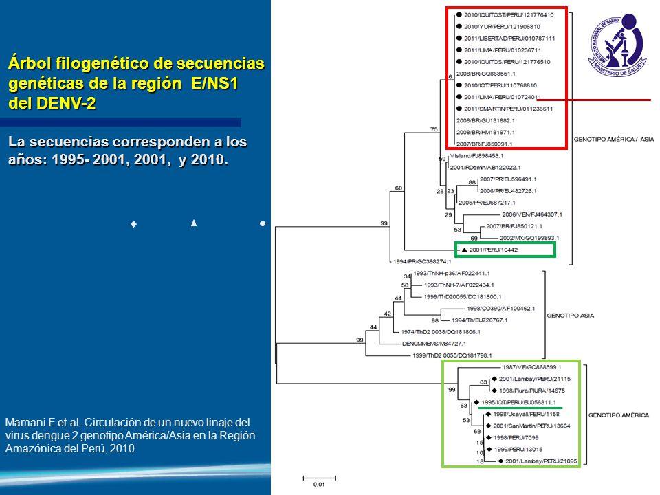 Árbol filogenético de secuencias genéticas de la región E/NS1 del DENV-2 La secuencias corresponden a los años: 1995- 2001, 2001, y 2010. Mamani E et