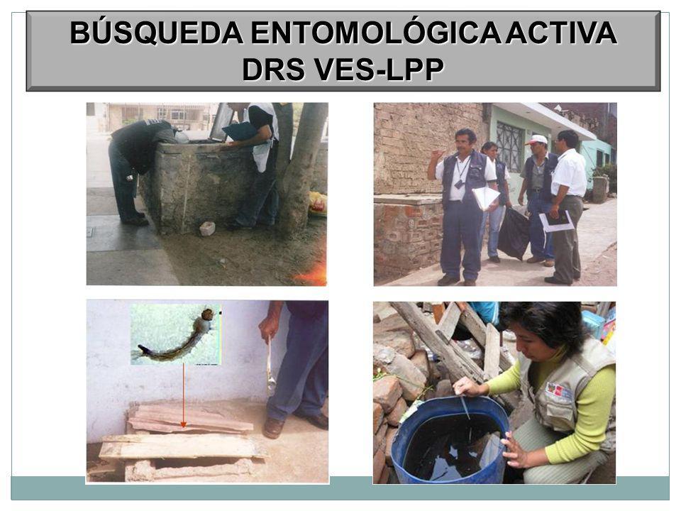 BÚSQUEDA ENTOMOLÓGICA ACTIVA DRS VES-LPP