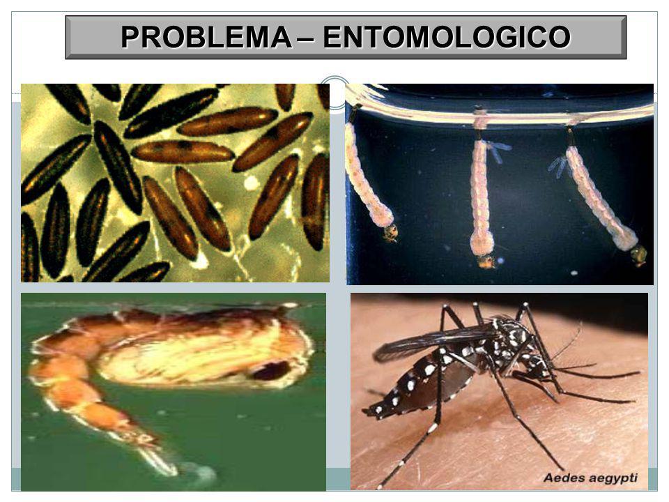 PROBLEMA – ENTOMOLOGICO