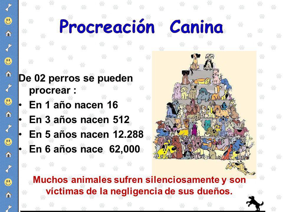 De 02 perros se pueden procrear : En 1 año nacen 16 En 3 años nacen 512 En 5 años nacen 12.288 En 6 años nace 62,000 Muchos animales sufren silenciosa