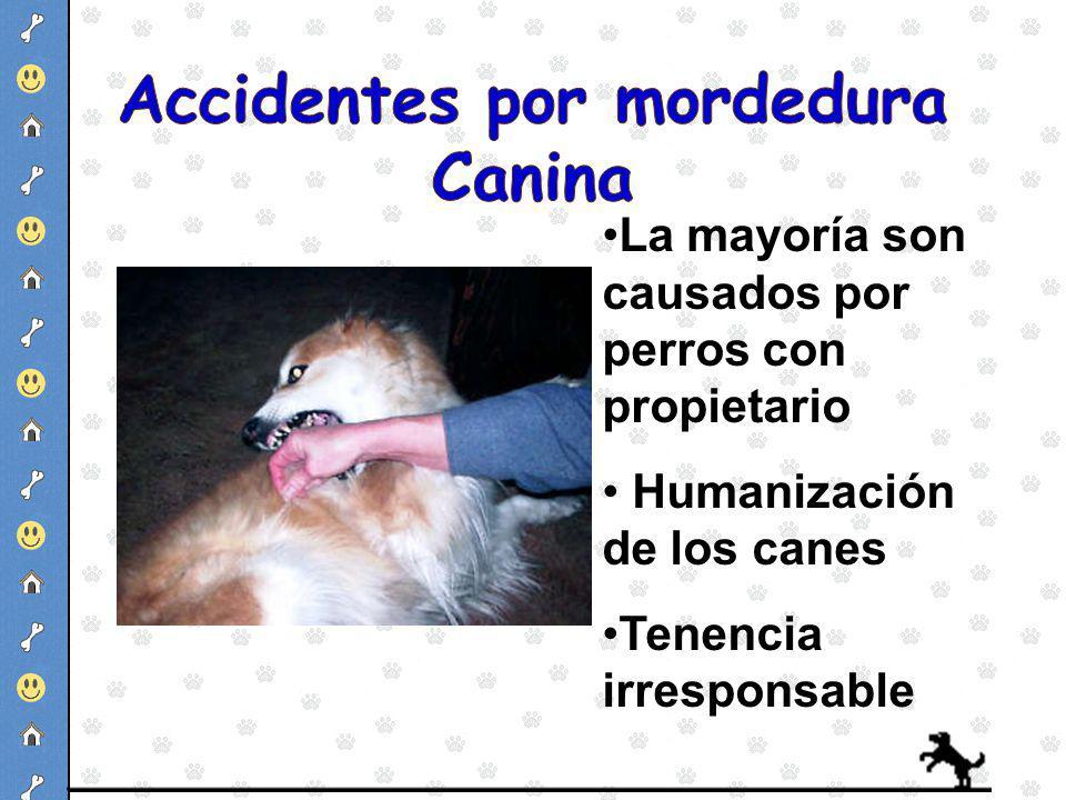 La mayoría son causados por perros con propietario Humanización de los canes Tenencia irresponsable
