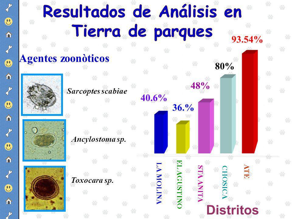 48% 80% 93.54% 40.6% LA MOLINA STA ANITA 36.% EL AGUSTINO CHOSICA ATE Distritos Sarcoptes scabiae Ancylostoma sp. Toxocara sp. Agentes zoonòticos