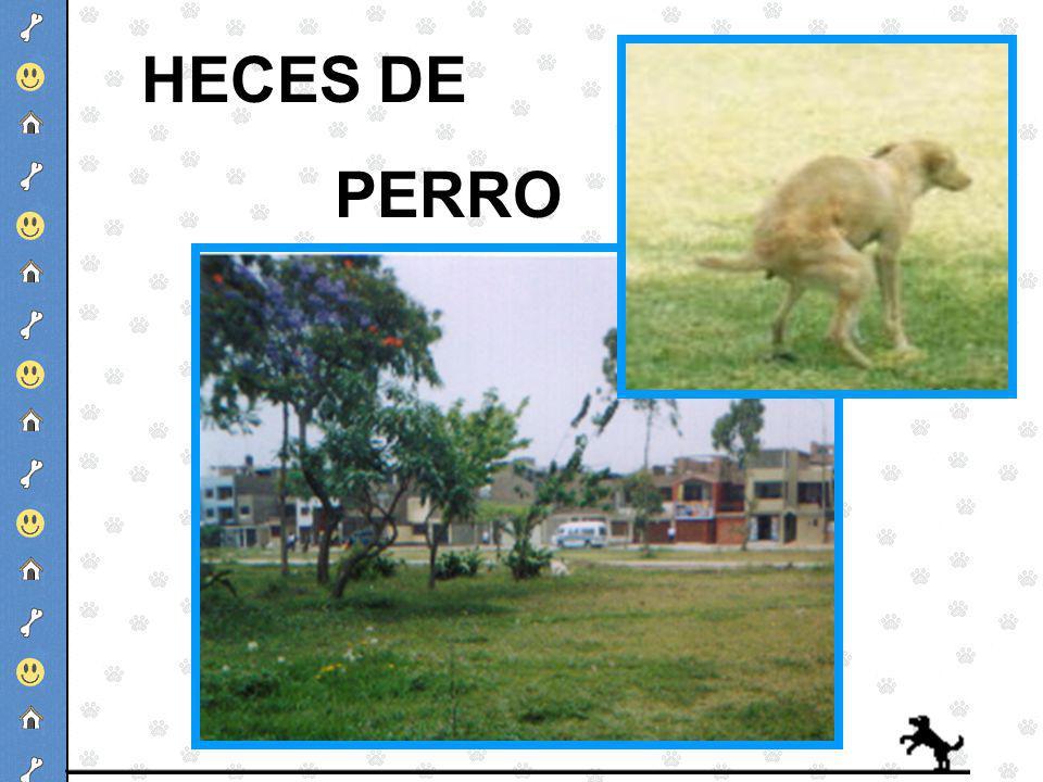 HECES DE PERRO