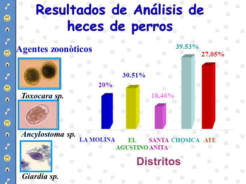 18.46% 39.53% 27.05% 20% LA MOLINA SANTA ANITA 30.51% EL AGUSTINO CHOSICAATE Distritos Toxocara sp. Ancylostoma sp. Giardia sp. Agentes zoonòticos