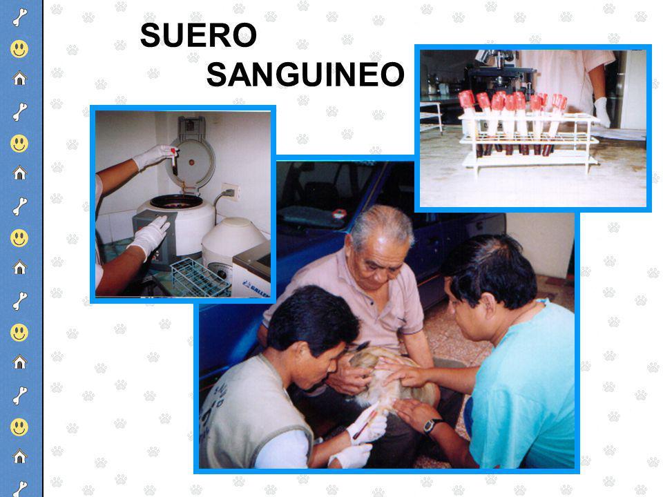 SUERO SANGUINEO