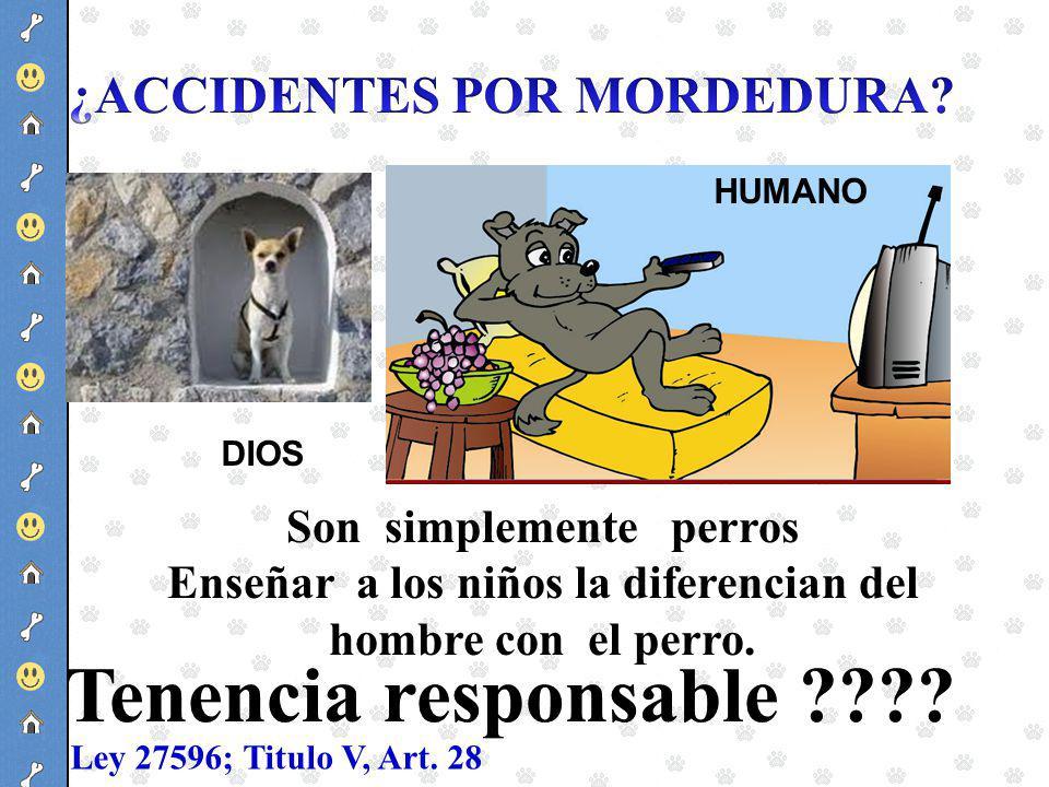 Son simplemente perros Enseñar a los niños la diferencian del hombre con el perro. DIOS HUMANO Ley 27596; Titulo V, Art. 28