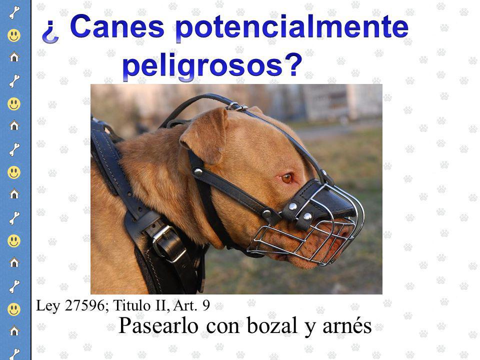 Pasearlo con bozal y arnés Ley 27596; Titulo II, Art. 9