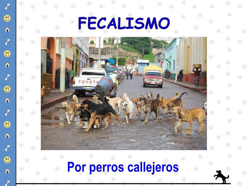 Por perros callejeros