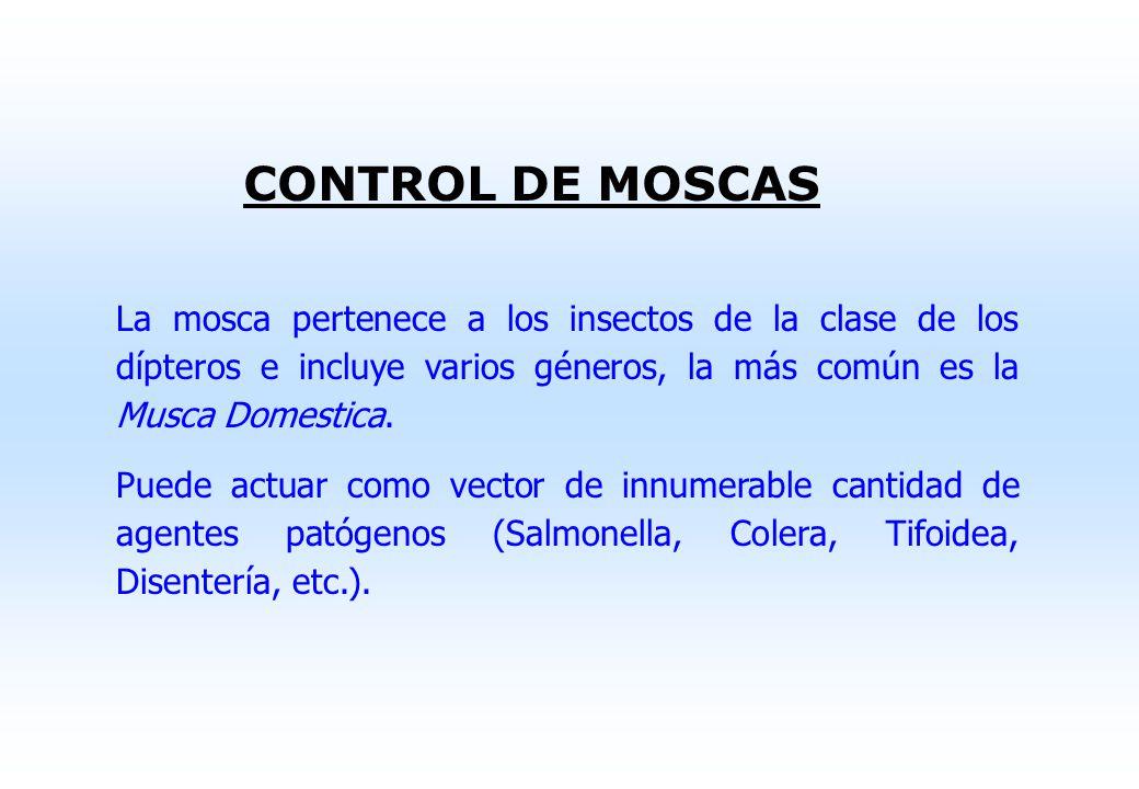 MEDIDAS PARA EVITAR LA PROLIFERACIÓN DE INSECTOS Higiene del área Uso de tarimas Rotación de stocks (PEPS) Ventilación, humedad y temperatura adecuada