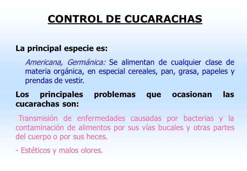 Medidas de Control y Complementarias Control químico Estos procedimientos incluyen el uso de plaguicidas en diferentes presentaciones (piretrinas) y e