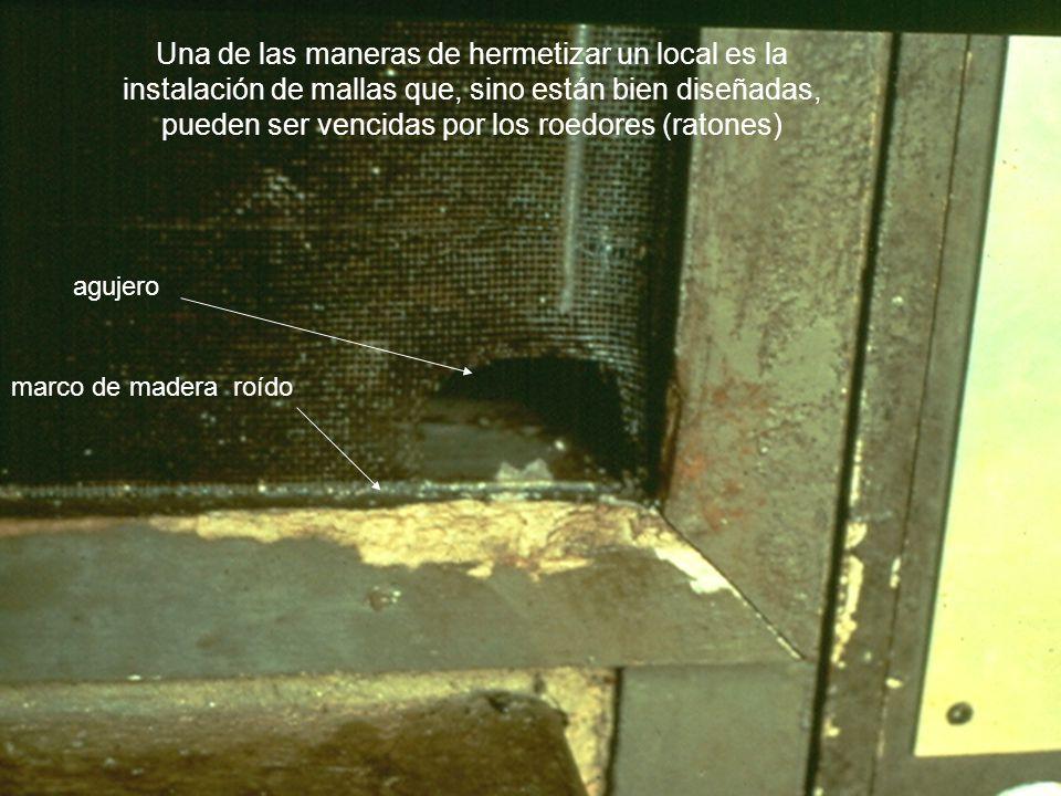 Una de las maneras de hermetizar un local es la instalación de mallas que, sino están bien diseñadas, pueden ser vencidas por los roedores (ratones) a