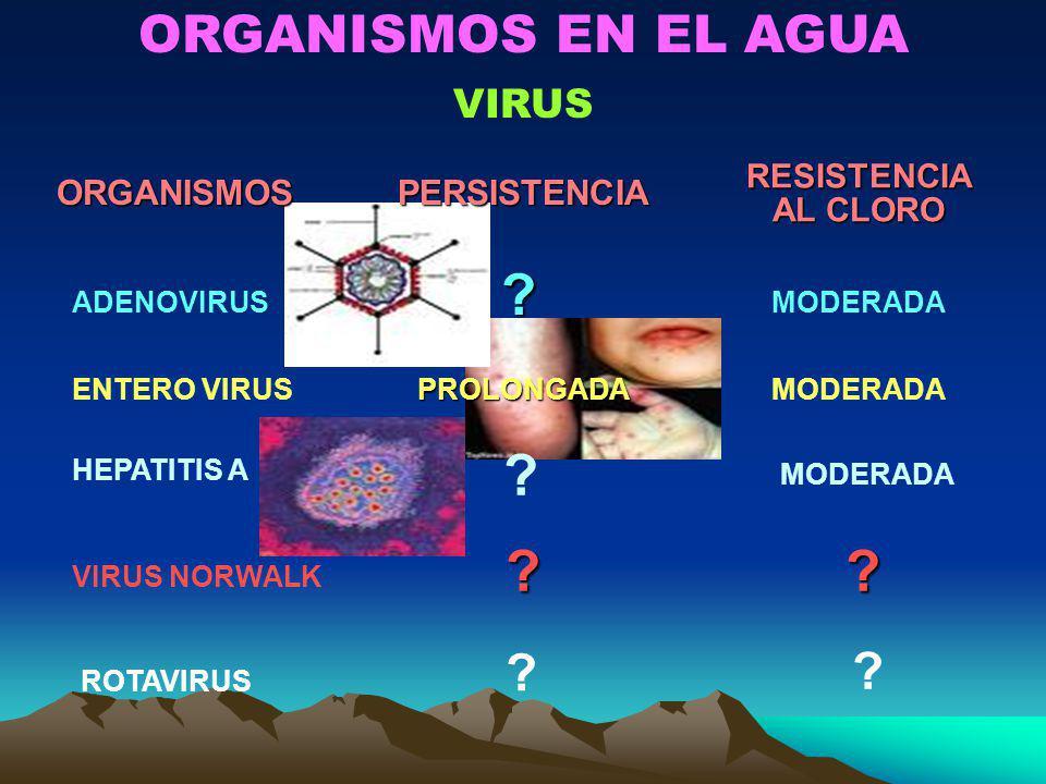 ORGANISMOS EN EL AGUA VIRUSORGANISMOSPERSISTENCIARESISTENCIA AL CLORO ADENOVIRUS? ENTERO VIRUSPROLONGADAMODERADA HEPATITIS A ? MODERADA VIRUS NORWALK
