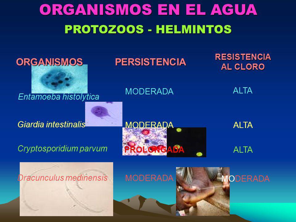 ORGANISMOS EN EL AGUA PROTOZOOS - HELMINTOS ORGANISMOSPERSISTENCIARESISTENCIA AL CLORO Entamoeba histolytica ALTA MODERADA Giardia intestinalis ALTAMO