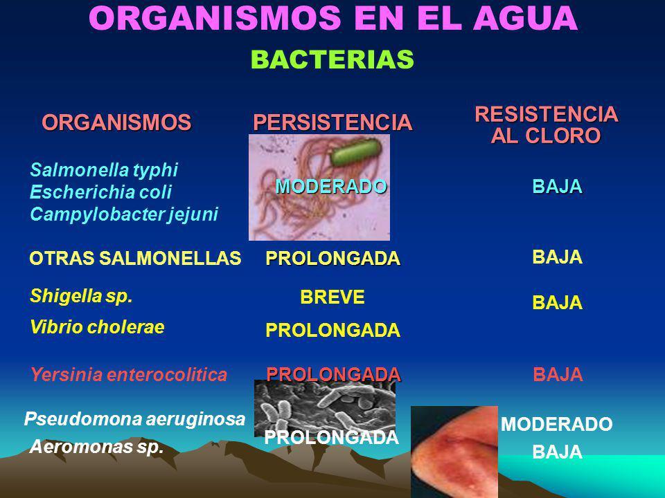 ORGANISMOS EN EL AGUA BACTERIASORGANISMOSPERSISTENCIARESISTENCIA AL CLORO Salmonella typhi Escherichia coli Campylobacter jejuniMODERADOBAJA OTRAS SAL