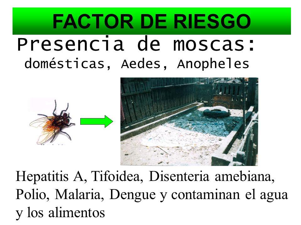 Los criaderos de cerdos en los patios de las casas son un foco de infección y contaminación grave al ambiente y la salud pública ya que las heces feca