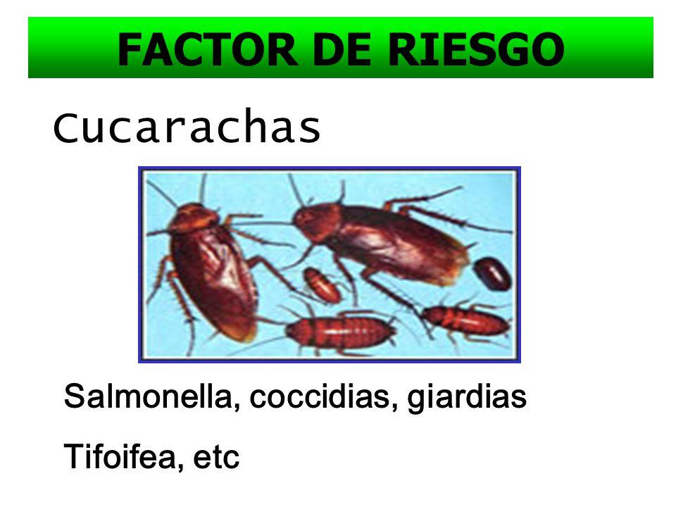 Presencia de moscas: domésticas, Aedes, Anopheles Hepatitis A, Tifoidea, Disenteria amebiana, Polio, Malaria, Dengue y contaminan el agua y los alimen