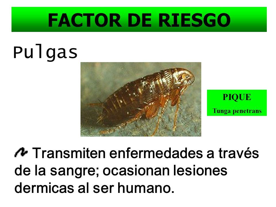 Cucarachas Salmonella, coccidias, giardias Tifoifea, etc FACTOR DE RIESGO