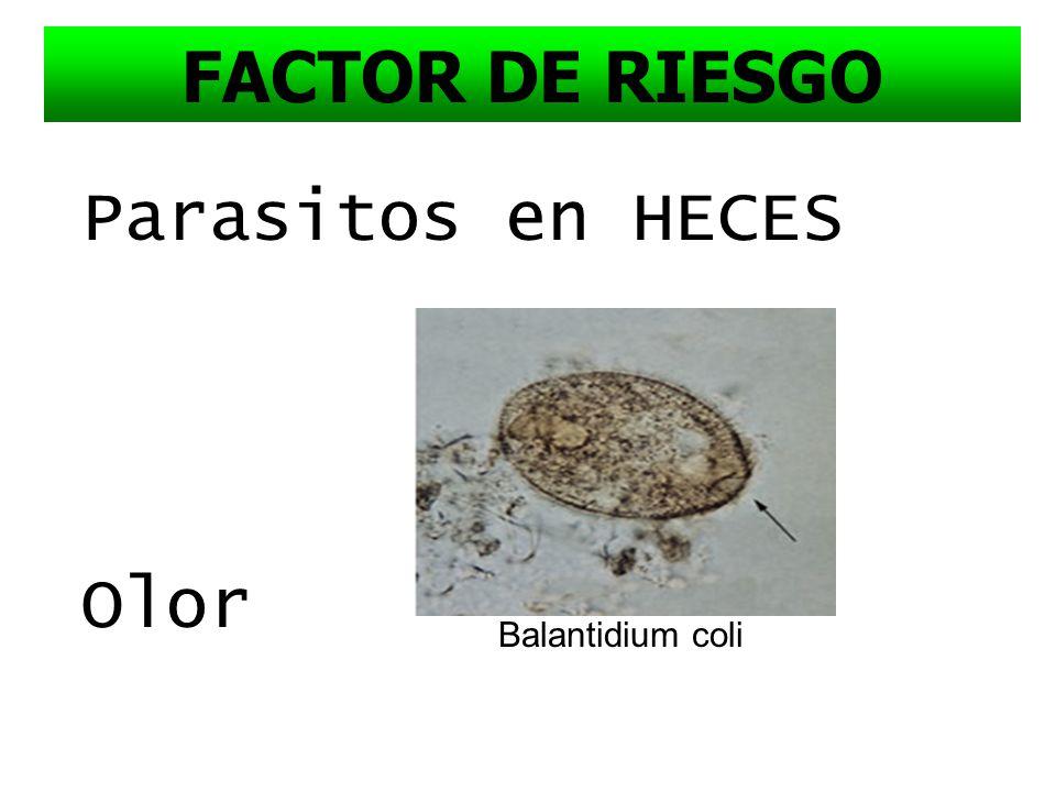 HIDATIDOSIS PORCINA FACTOR DE RIESGO