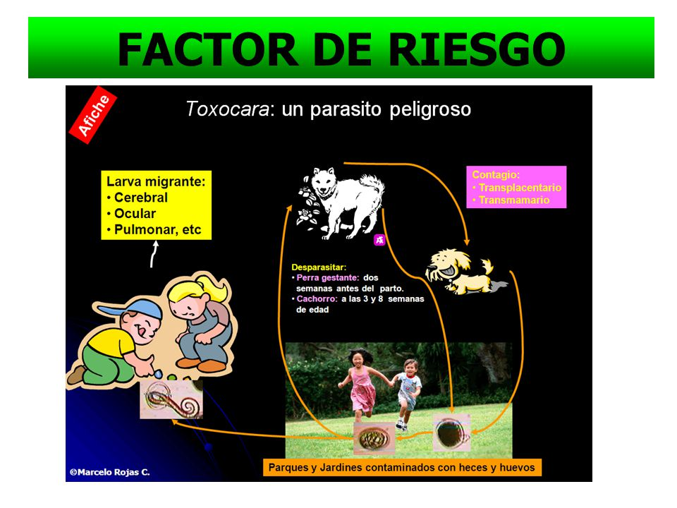 Parasitos en HECES Olor Balantidium coli FACTOR DE RIESGO