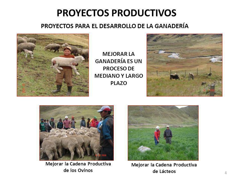 PROYECTOS PRODUCTIVOS PROYECTOS PARA EL DESARROLLO DE LA GANADERÍA Mejorar la Cadena Productiva de los Ovinos Mejorar la Cadena Productiva de Lácteos