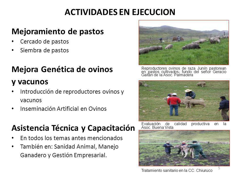 ACTIVIDADES EN EJECUCION Mejoramiento de pastos Cercado de pastos Siembra de pastos Mejora Genética de ovinos y vacunos Introducción de reproductores