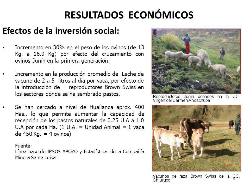 RESULTADOS ECONÓMICOS Efectos de la inversión social: Incremento en 30% en el peso de los ovinos (de 13 Kg. a 16.9 Kg) por efecto del cruzamiento con