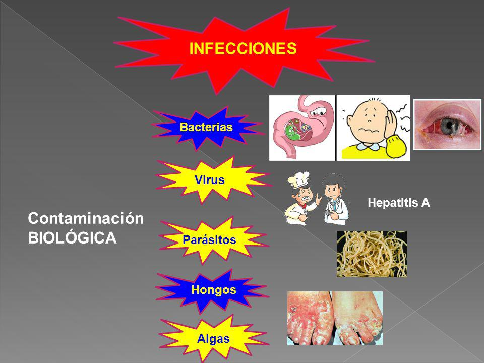 INFECCIONES Contaminación BIOLÓGICA Bacterias Virus Hongos Algas Parásitos Hepatitis A