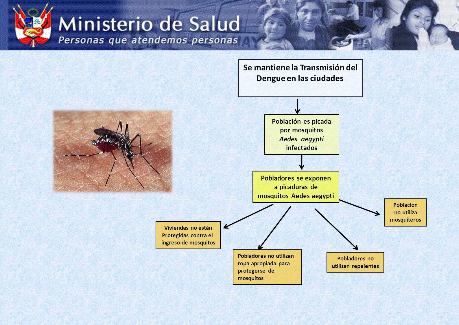 Se mantiene la Transmisión del Dengue en las ciudades Población es picada por mosquitos Aedes aegypti infectados Pobladores no utilizan ropa apropiada