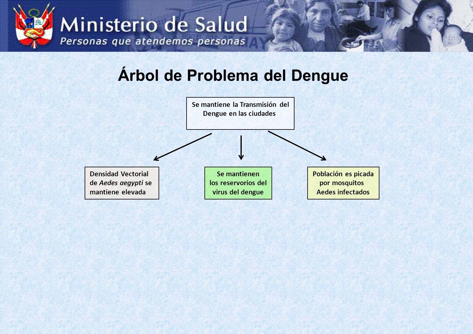 Se mantiene la Transmisión del Dengue en las ciudades Densidad Vectorial de Aedes aegypti se mantiene elevada Se mantienen los reservorios del virus d