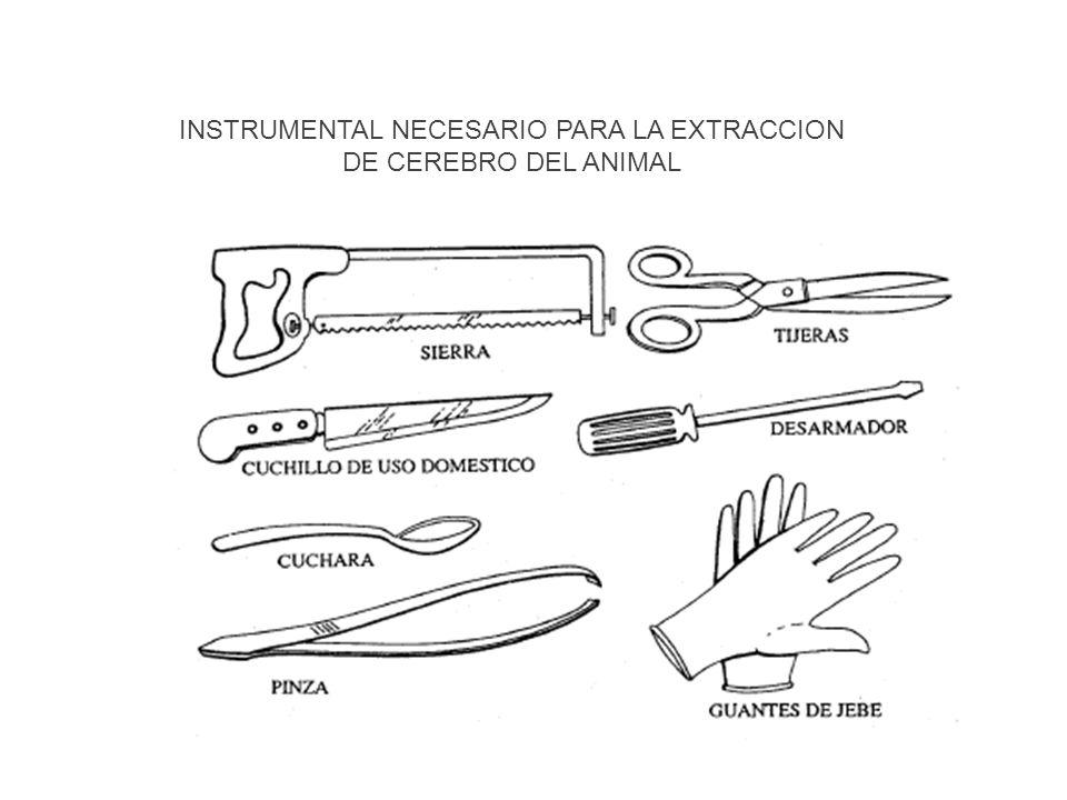 Procedimiento de obtención de muestras Sujetar firmemente la cabeza del animal sobre la mesa o superficie de trabajo, si fuera posible con la ayuda de algún dispositivo mecánico.