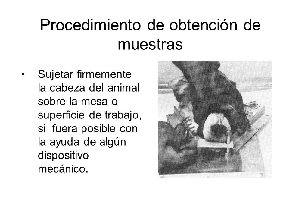 MUESTRAS REMITIDAS AL INS PARA DIAGNOSTICO DE RABIA, POR REGION, 2010- 2013