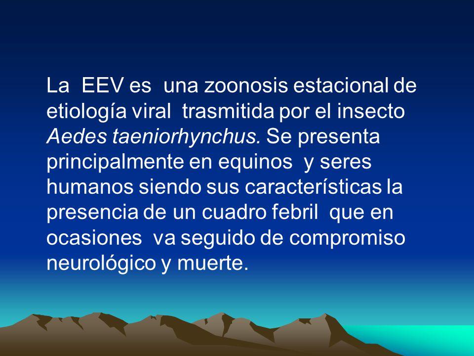 La EEV es una zoonosis estacional de etiología viral trasmitida por el insecto Aedes taeniorhynchus.